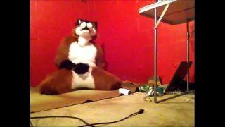 Foxy having some fun.
